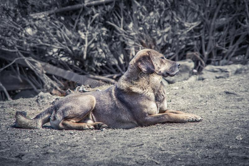 Close up view of one grey dog laying down on the cold gray ground. Looking sad. Cold day in Nepal. royalty free stock photography