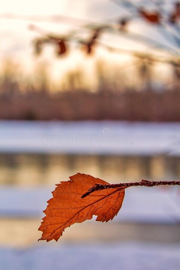 Close Up Leaf In Front Of A Sunlit River. A close up view of an orange leaf in front of a sunlit river royalty free stock image