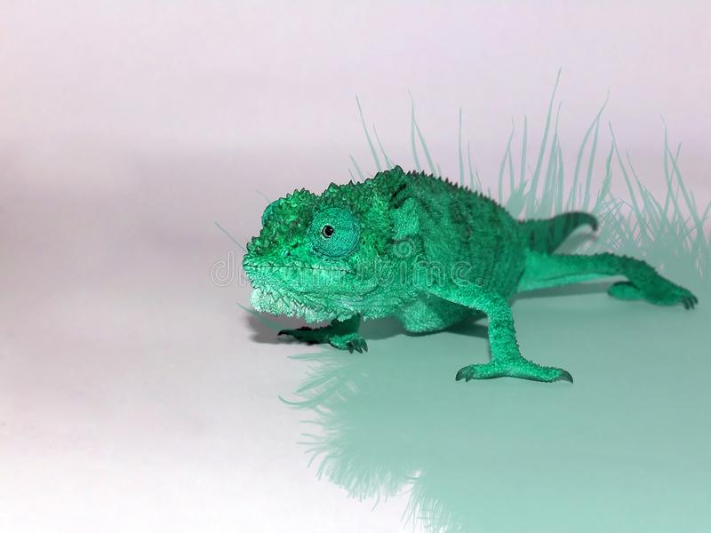 Brightly coloured Dwarf Chameleon. A close up view of a photo shopped Dwarf chameleon, brightly coloured pastel mint royalty free stock image