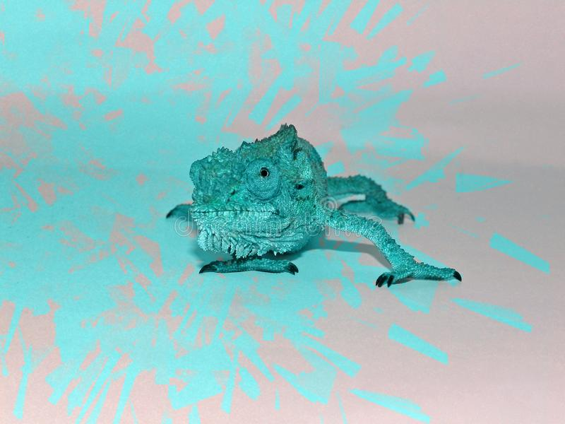 Turquoise photo shopped dwarf chameleon. A close up view of a photo shopped Southern Dwarf Chameleon with zany turquoise colouring stock photography