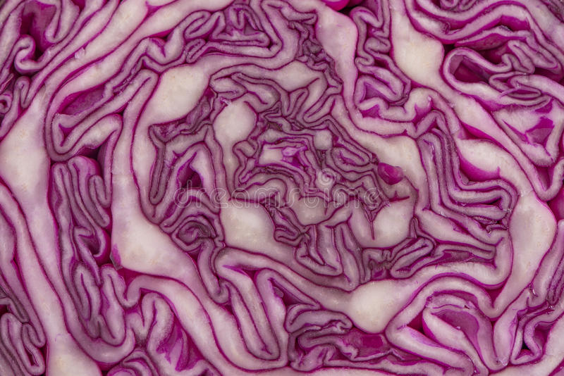 Close up view of a purple cabbage royalty free stock images