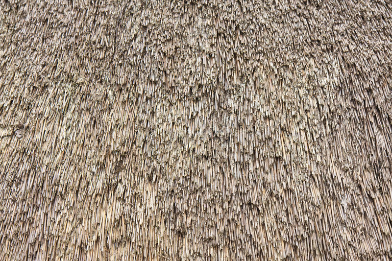 Close up view of reed thatch. Roof royalty free stock images