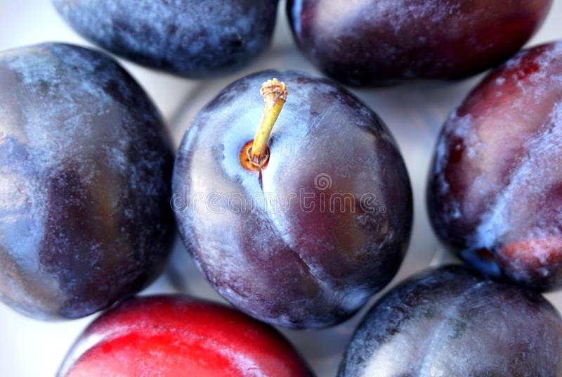 Close up view of ripe organic plums, Prunus royalty free stock photography