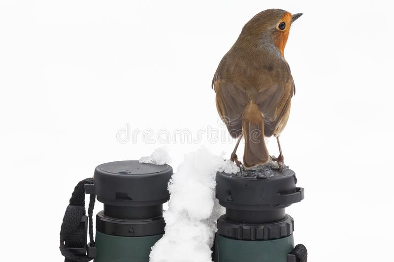 Robin redbreast sat on binoculars in winter. Close up view of a robin redbreast bird sat on top of a pair of binoculars facing away during winter with snow stock photos