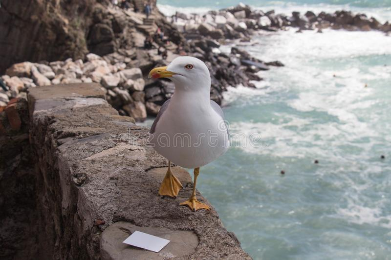 Close up view of a seagull on a stone with seascape on background royalty free stock photography