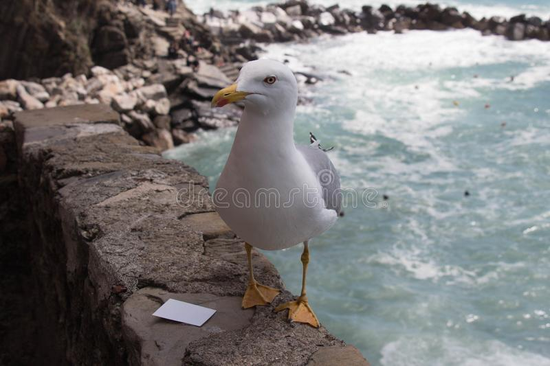 Close up view of a seagull on a stone with seascape on background stock photo