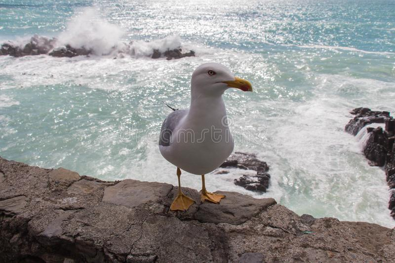 Close up view of a seagull on a stone with seascape on background stock image
