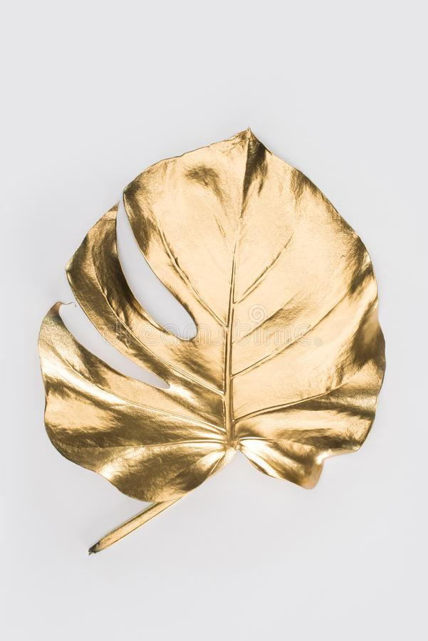 close up view of shiny big golden leaf stock photo