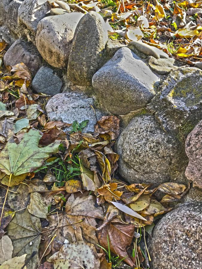 Yellow leaves from the trees scattered over the gray stones in autumn stock photos