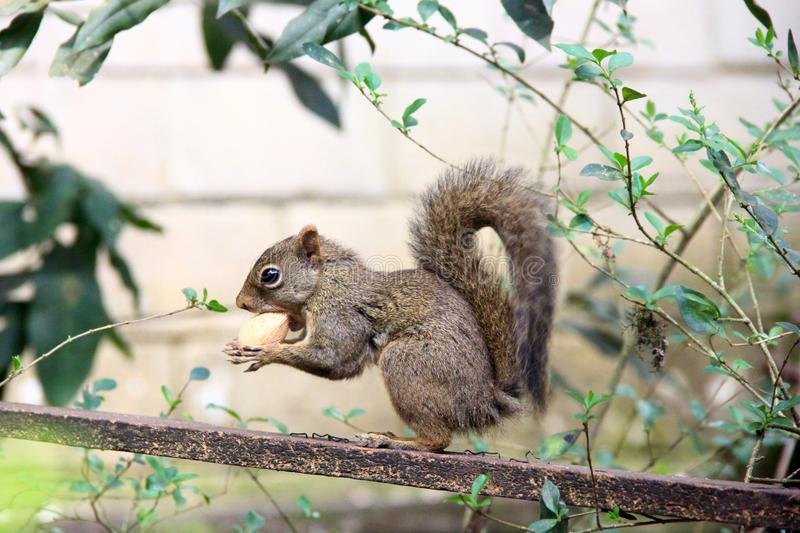 Close up view of small squirrel of tree stock photo