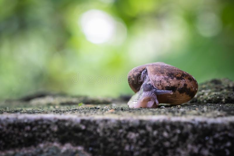 Close up view of snail crawling on cement floor. With blurred background, Monachoides vicinus, biology royalty free stock photo
