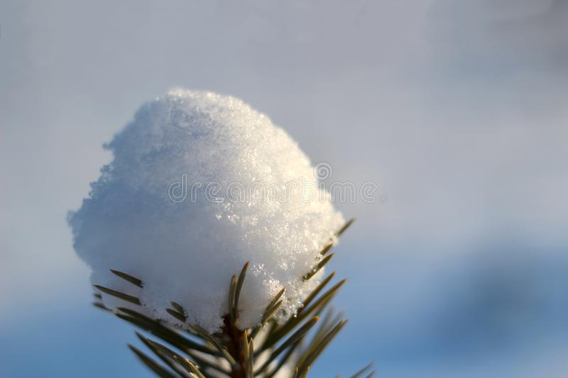 Close up view of snow-covered tree branch in frosty forest in sunny day. Time before Christmas.  royalty free stock photo