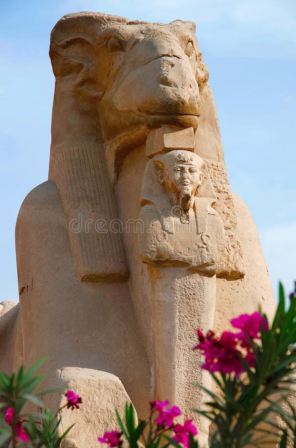 Close up view of the Sphinx of the god Amon Ra, Body of the lion and head of a sheep and King Nectanebu standing in front of the s royalty free stock image