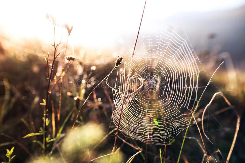 Close up view of a spider web. Photo of cobweb against sunrise. Autumn nature stock photography