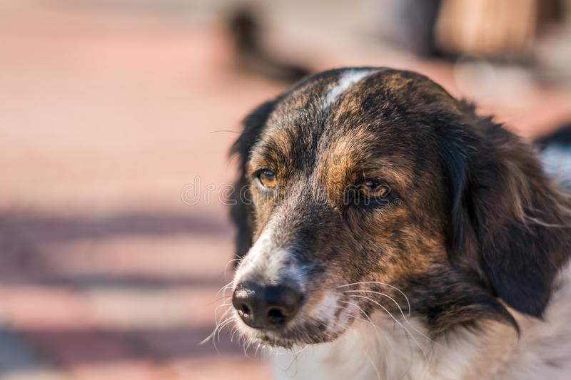 Close-up view of the stray dog head royalty free stock photography