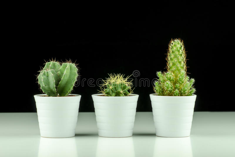 Close-up view of three cacti in pots on black background royalty free stock photo