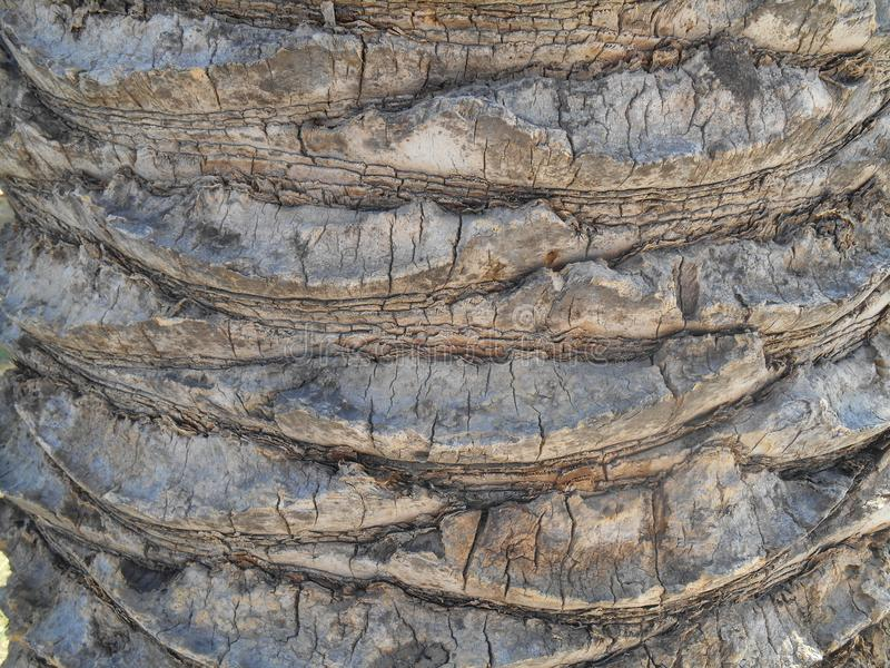 Close up view to brown palm tree peel. Photography of close up view to brown palm tree peel royalty free stock image