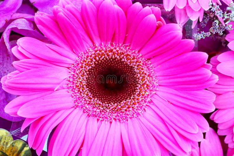 Close-up view, top view, pastel pink flowers  Beautiful nature background image. Asia royalty free stock photography