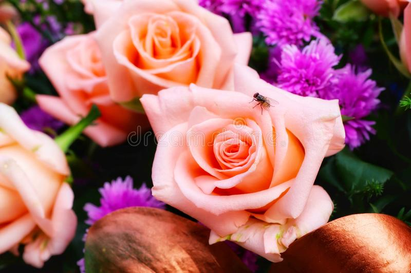 Close-up view, top view, rose, orange, beautiful pastel, bouquet of flowers. Green royalty free stock photography