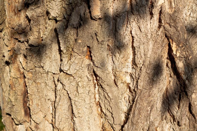 Close up view of tree bark texture. Nature wood background royalty free stock image