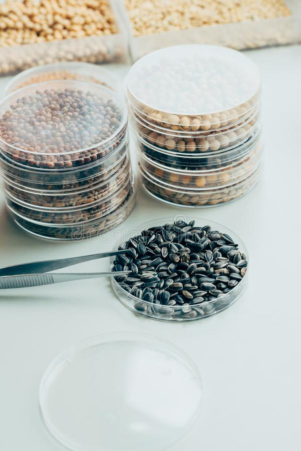close up view of tweezers various grains and sunflower seeds in modern agro stock photo