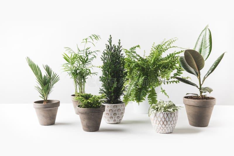 Beautiful green houseplant stock photo