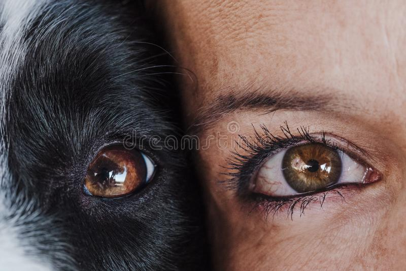 Close up view of woman and dog eyes together. Love for animals concept stock photos