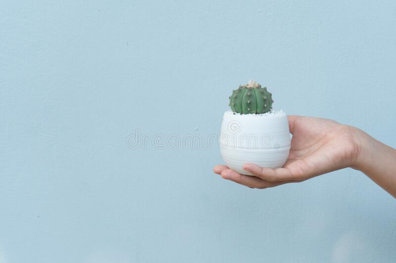 Close up view of a woman Study and care cactus. On wood table in cactus cultivation house, Cactus nursery stock photo