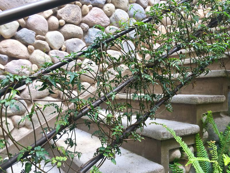 Close Up of Vines Growing up Stairway stock image
