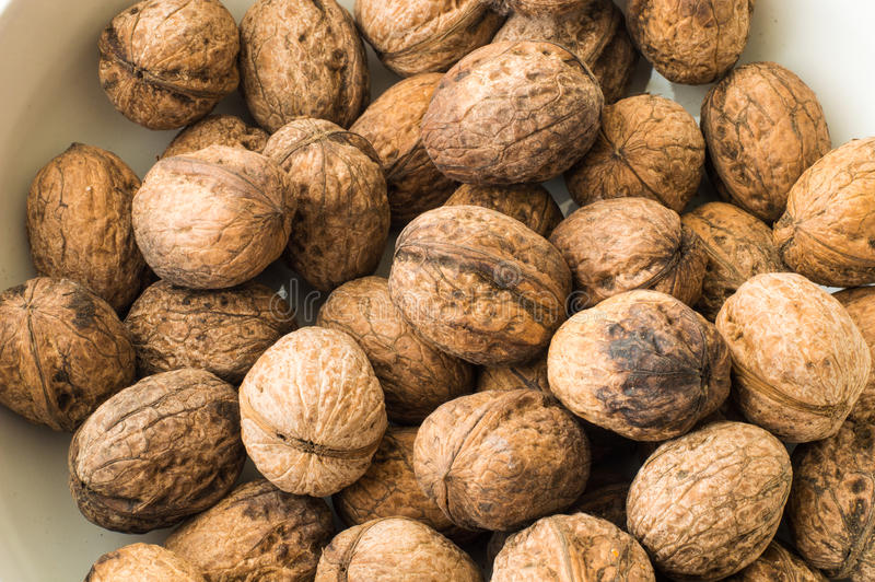 Close up of walnuts in shell on a white background. Walnuts in shell on a white background stock photography