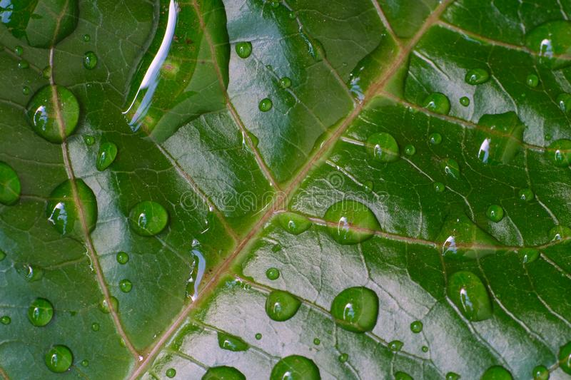 Close up water drop over green leaf I stock photo