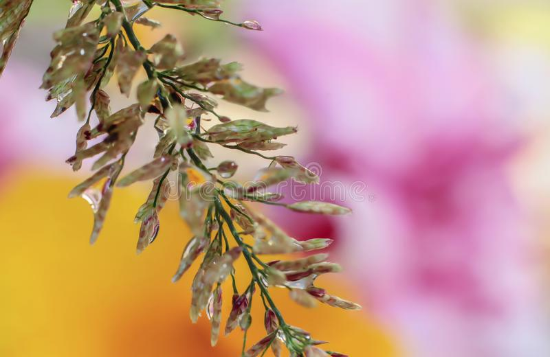Water droplets on the grass flower royalty free stock photos