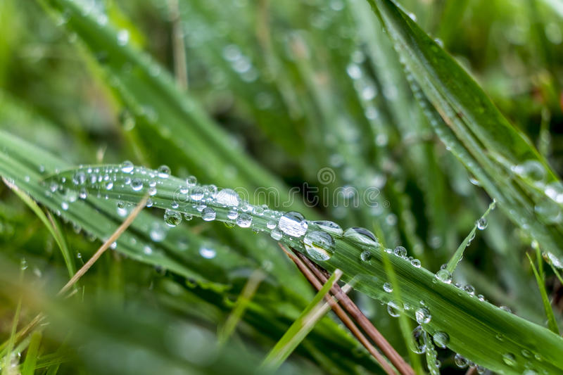 Close up of water droplets. On leaf stock photography