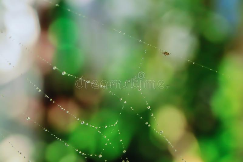 Water droplets on the spider web royalty free stock photo