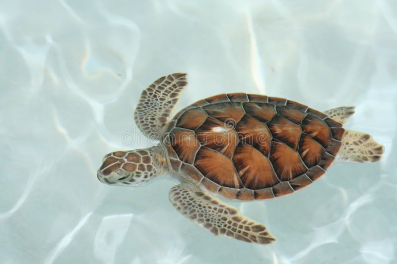 Close-up of Water Turtle stock photo
