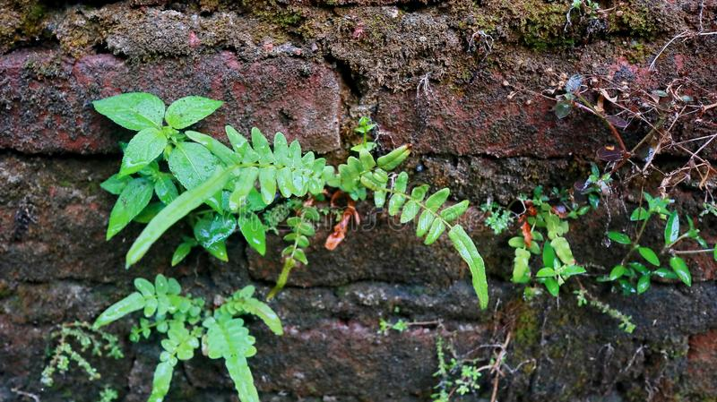 Close-up of Wet plant growth on cracked and mossy old cement walls. Incredible background with open space for text or as a vintage, urban or grunge background royalty free stock images