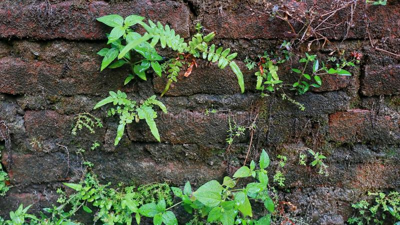 Close-up of Wet plant growth on cracked and mossy old cement walls. Incredible background with open space for text or as a vintage, urban or grunge background stock image