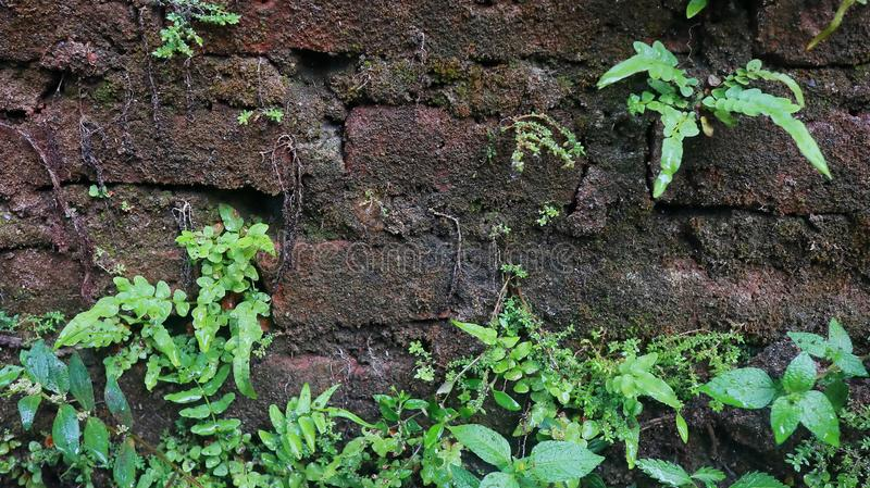 Close-up of Wet plant growth on cracked and mossy old cement walls. Incredible background with open space for text or as a vintage, urban or grunge background royalty free stock photos