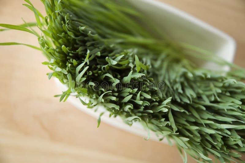 Close up wheatgrass