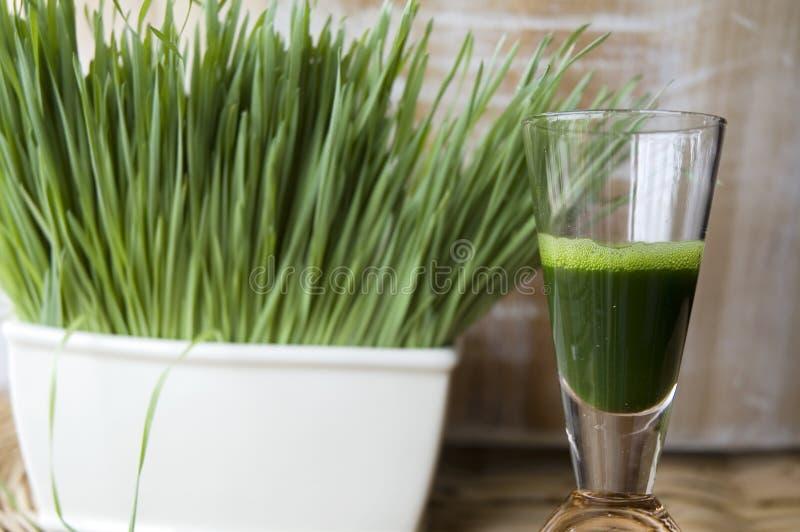 Close up wheatgrass juice shot stock images