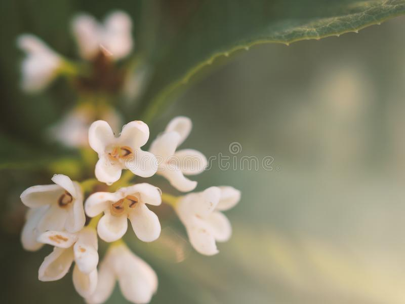 Close up white bouquet flower stock photography