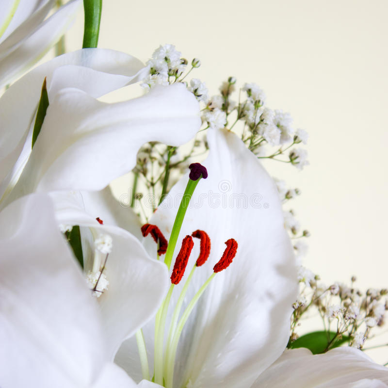 Download White Calla Lilly stock image. Image of nobody, innocence - 29709677