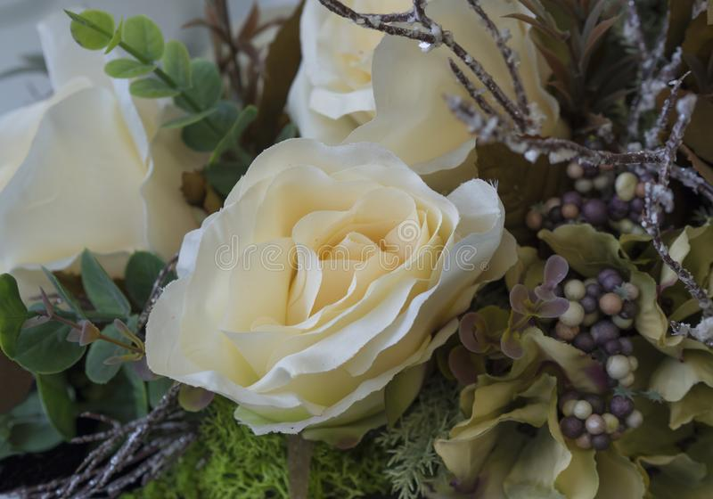 Close up white cream textile rose nad green leaves decorative fl. Oral background stock images