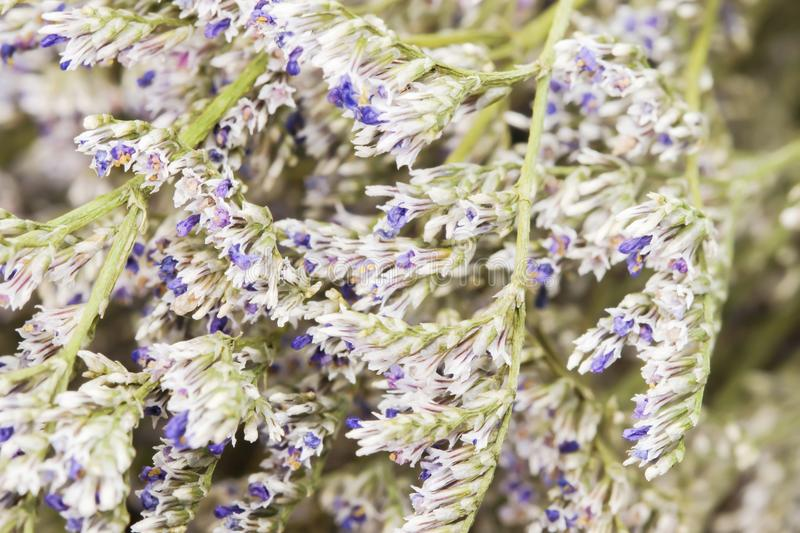 Closeup Of White Dried Caspia Flowers Background Stock Image Image Of Blossom Branch 111752561