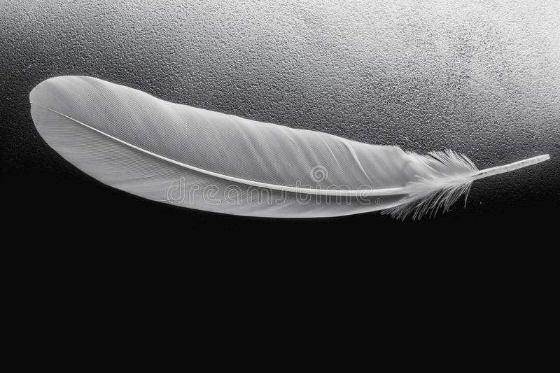 Close up white feather on black background. royalty free stock images
