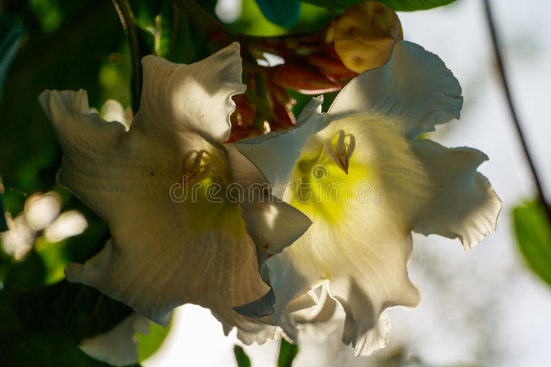 Close up,white flower. By sky background stock photos