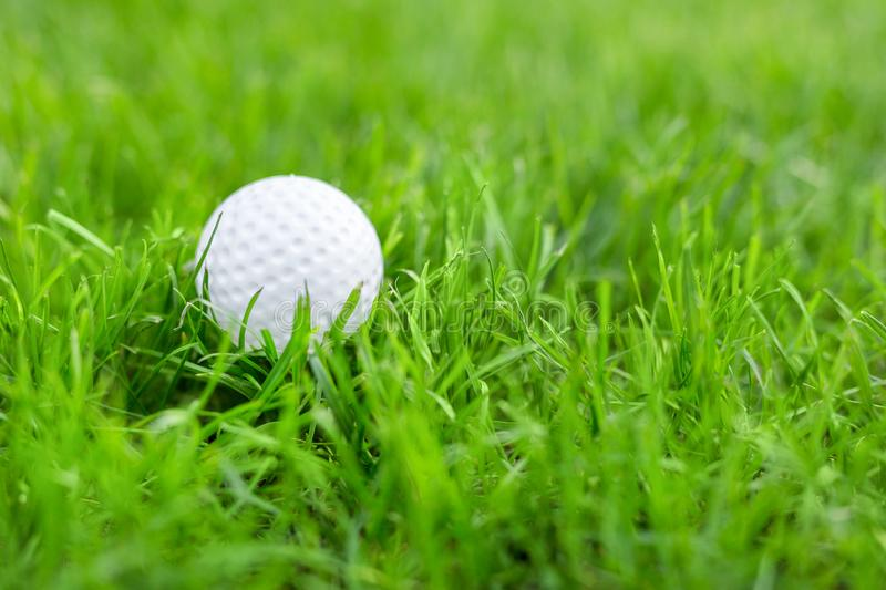 Close-up of white golf ball in green grass meadow. Details of play field. Badly prepared lawn for professional game.  royalty free stock image