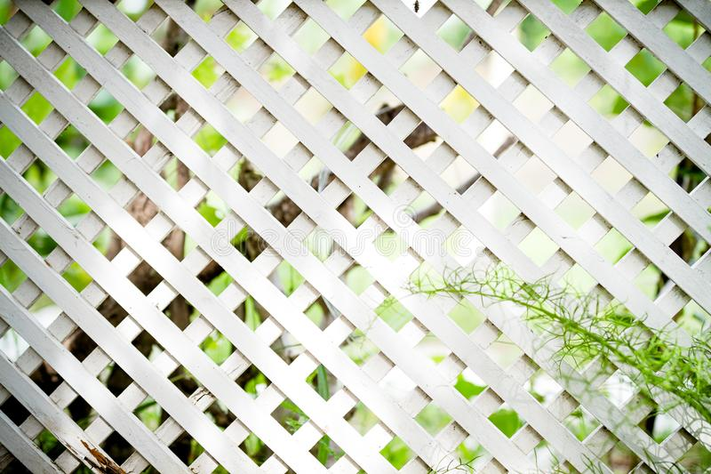 White lattice fence. Close up White lattice fence in the garden for background royalty free stock photos