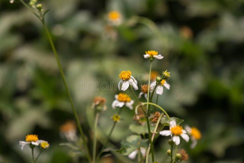 small white  flower royalty free stock photos