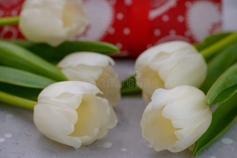 Close-up white tulips royalty free stock image